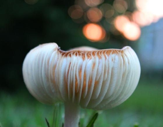 light-spores