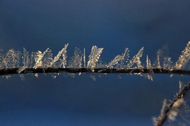 hoary-frost